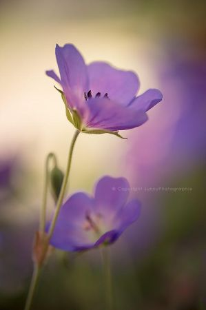 Fleur Orageuse by JunnyPhotography