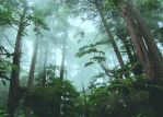 the everforest.2. by etheraiel