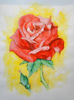 Watercolor rose by niqitaMonster