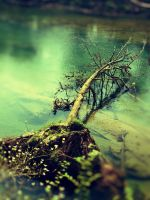 The Lomo Tree by AGreatHieght