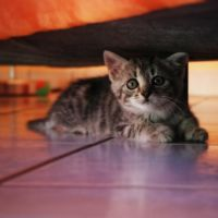Under the couch II by alaturqo