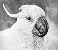 Cockatoo Drawing by blue-flamingo