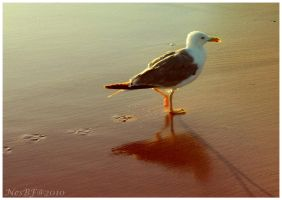 the seagull by NesBf