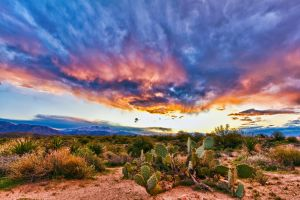 Sonoran Sunrise by AndrewShoemaker