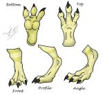Dragon Feet Reference by Wyldfire7