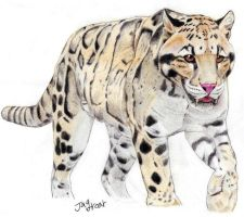 Clouded leopard of the future by Jagroar