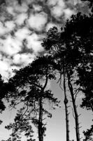 Castle Douglas: pines+skies by Coigach