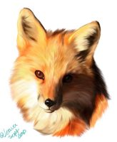 Fox Face by Joava