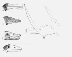 Four Pterosaurs by briankroesch