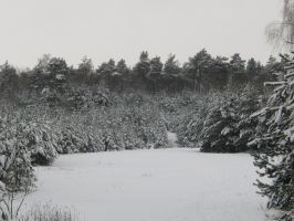 winter forest 3 by AlenaKrause