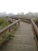 Crooked Dock Path by GreenEyezz-stock