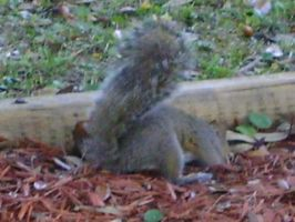 Close up on squirrel 9 by princesslillymono