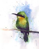 Green bird by Medhi