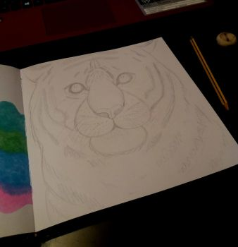 Tiger sketch by MelodyLawrenceArt