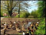 Duck Village by parallel-pam