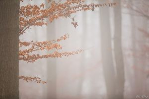 Fog in the Forest #2 by DaSchu