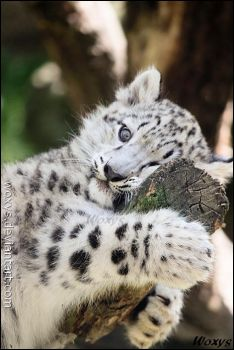 A tree hugger. by woxys