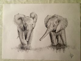 two little elephants by 1997girl