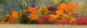 Shades of Autumn 2014.VIII by MadGardens