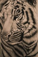 Tiger- Detail by Clover7777777