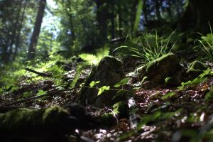 The Forest floor, Mt. Pilatus 2011 by PretendtoBelieve