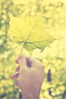 Leaf by katelynrphotography