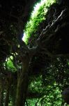 Levens Hall 110 by Forestina-Fotos
