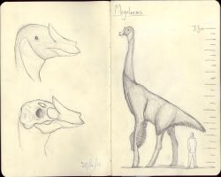 Megalornis by Deenosar
