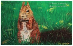 Squirrel - soft pastel by Oksana007