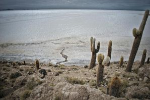 Isla de Pescado ,Uyuni by hexpion