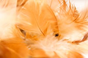 Feathers II by close-up-clive