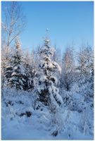 Winter Afternoon 21 by Eirian-stock