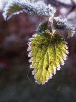 first frost 2014 5 by harrietbaxter