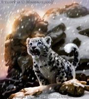 Snow Leopard: Kira by MoonsongWolf