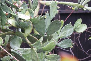 00122 - Cactus with Raindrops by emstock