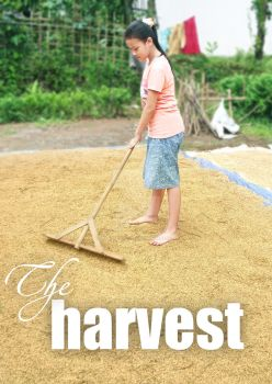 The harvest by subhannugraha