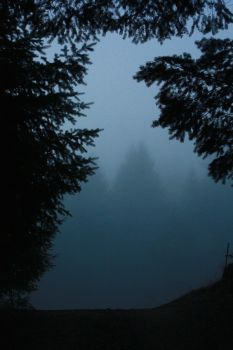 Foggy Morning by PlanetaryButterfly