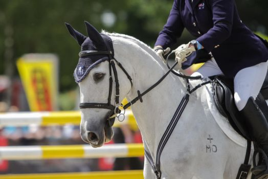 3DE Show Jumping Phase Stock 115 - White Portrait by LuDa-Stock