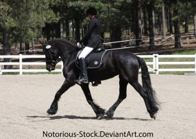 Dressage 005 by Notorious-Stock