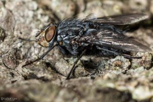 Big fly on a tree by CyclicalCore