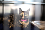 East Valley Animal Shelter 24 by Deliquesce-Flux