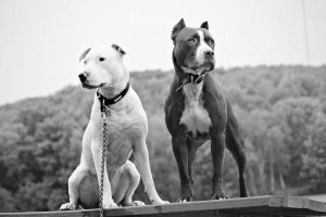 Keizer and Solo by kingstonrey