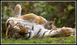 Mother and Cub 4 by Wolfy2k4