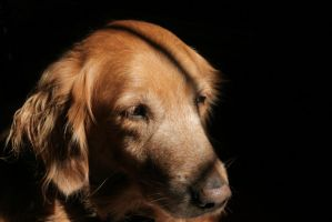 A Contemplative Canine Thinking Through A Thought by JustinOrtiz