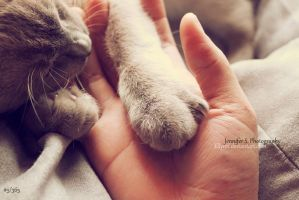 #5 Holding your paws by Ellynn
