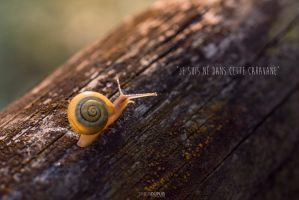 Sunset snail 1 by Simon120188