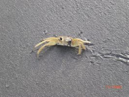 Crab With No Claws by SN2