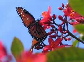 Butterfly and Flowers by FairyAndTurtleStock