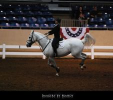 Gray Canter (3) by aipstock