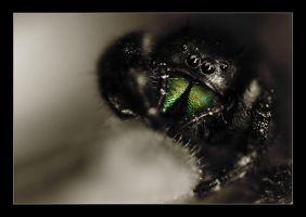 spider fangs by sergiemag
